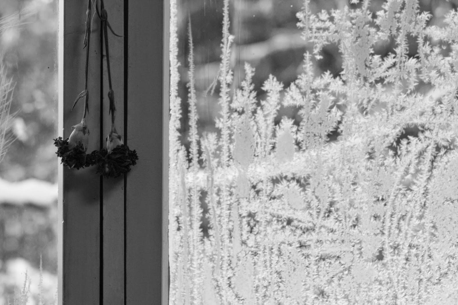 window, ice, flower, ventana, hielo, jäinen ikkuna