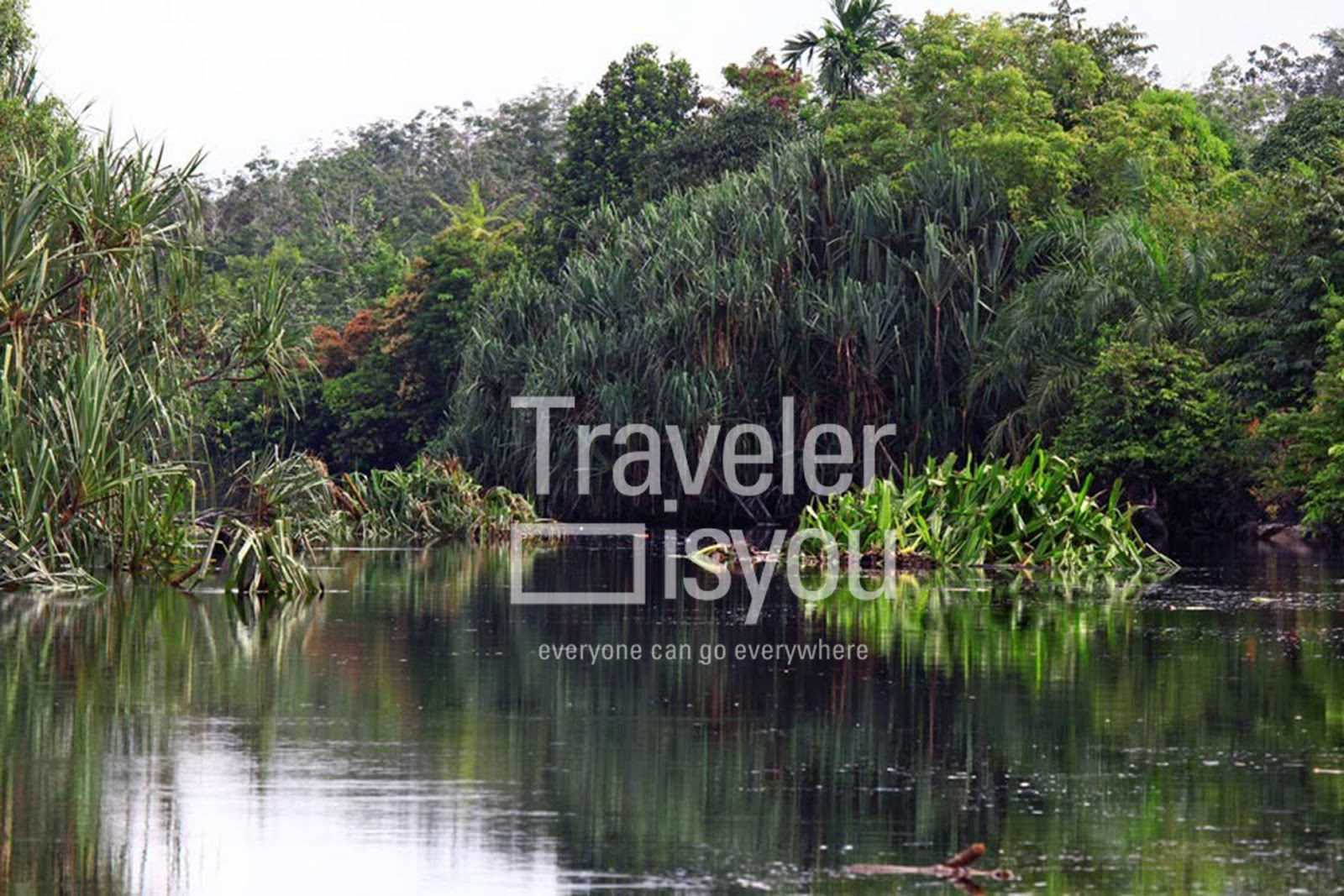 Kerumutan Forest Reserve is a Wildlife Reserve spanning over 1.3 million hectares of lowland forests, and inhabited by hundreds of species of flora and fauna. The grand Kampar River runs along its border, lined with thick mangrove trees.