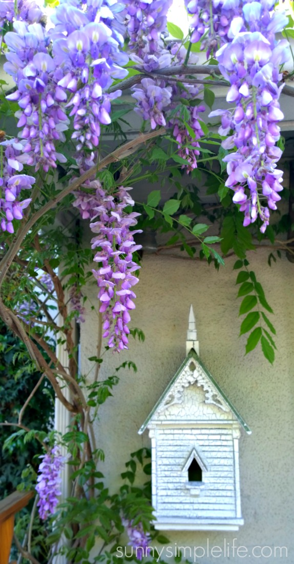 Sunny simple life cottage garden ideas wisteria old bird house workwithnaturefo