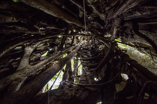 Interior de un árbol en el Cloud Forest Lodge