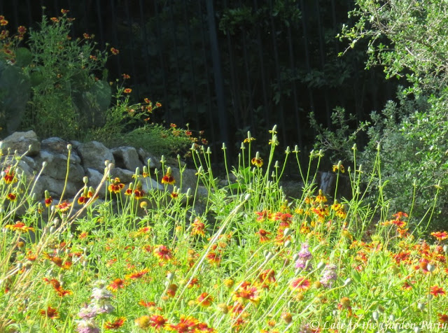 One Of My Favorites Was Ruthie Burrusu0027s Garden In Texas Hill Country. Upon  Arrival, We Walked Up A Steep Driveway, Enjoying Wildflowers In Bloom On  Both ...