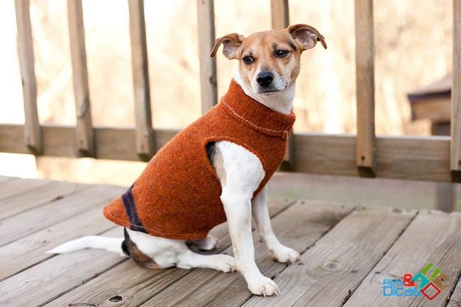 Como fazer roupa para cachorro