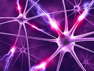 история и смысл существования мозга это поиск и нахождение раздражителей