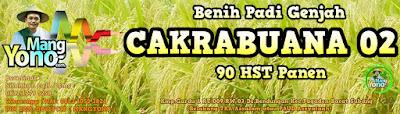 MANGYONO.com Jual Benih Padi CAKRABUANA 02 (CB02)