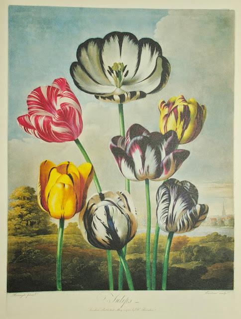 Vacheron Constantine Métiers D'art Florilège 10