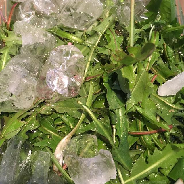 Unge blader kan legges i kaldt vann tilsatt isbiter