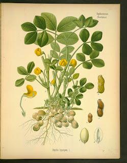 Free Botanical illustration Books.Read online or download.