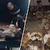 375 ekor kucing menunggu masa untuk disembelih berjaya diselamatkan selepas ditemui lelaki ini yang mencari kucingnya