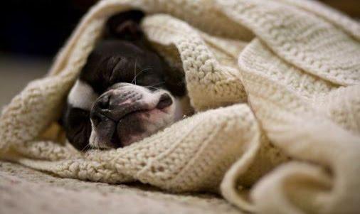 Dog Talk 101 Let Sleeping Dogs Lie