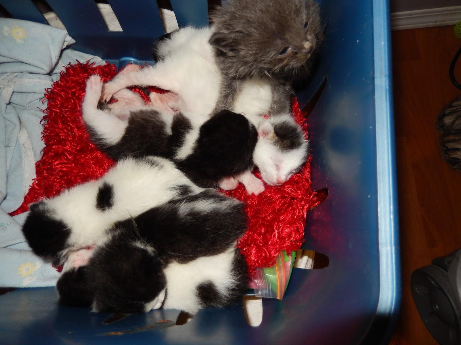 Donna S Teenie Tiny Kitten Tales Raining Kittens Again