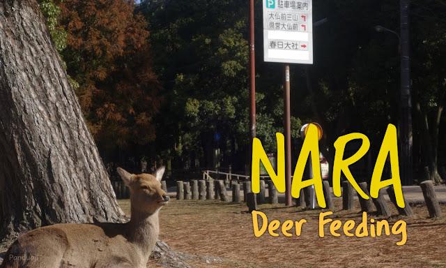Nara Deer Feeding