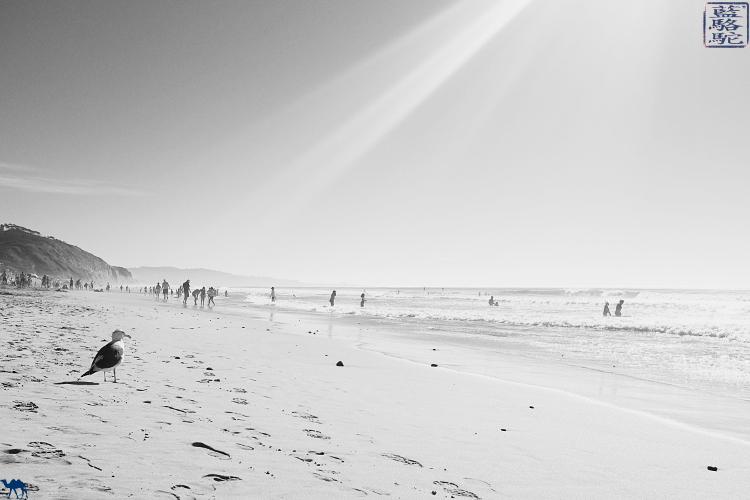 Le Chameau Bleu - Blog Voyage Californie USA - Mouette de la plage Torrey Pines en Californie du Sud
