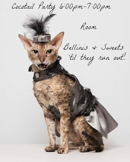 Coco the Couture Cat Photo by Paul Nathan, Cornish Rex, Pet Couture