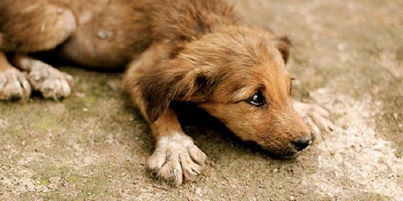Πώς νιώθει ο σκύλος σου όταν τον εγκαταλείπεις-''Συγκινητικό βίντεο''