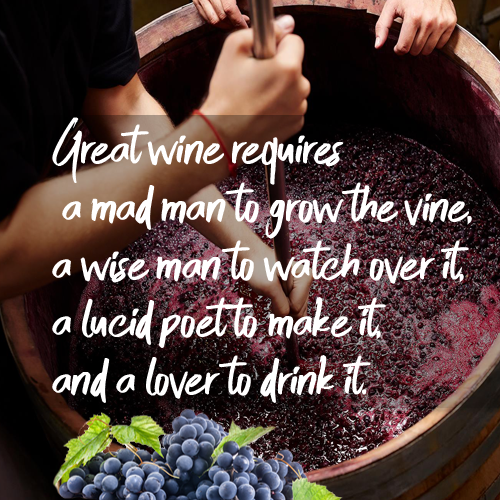 Wine Quote - Story of a great wine