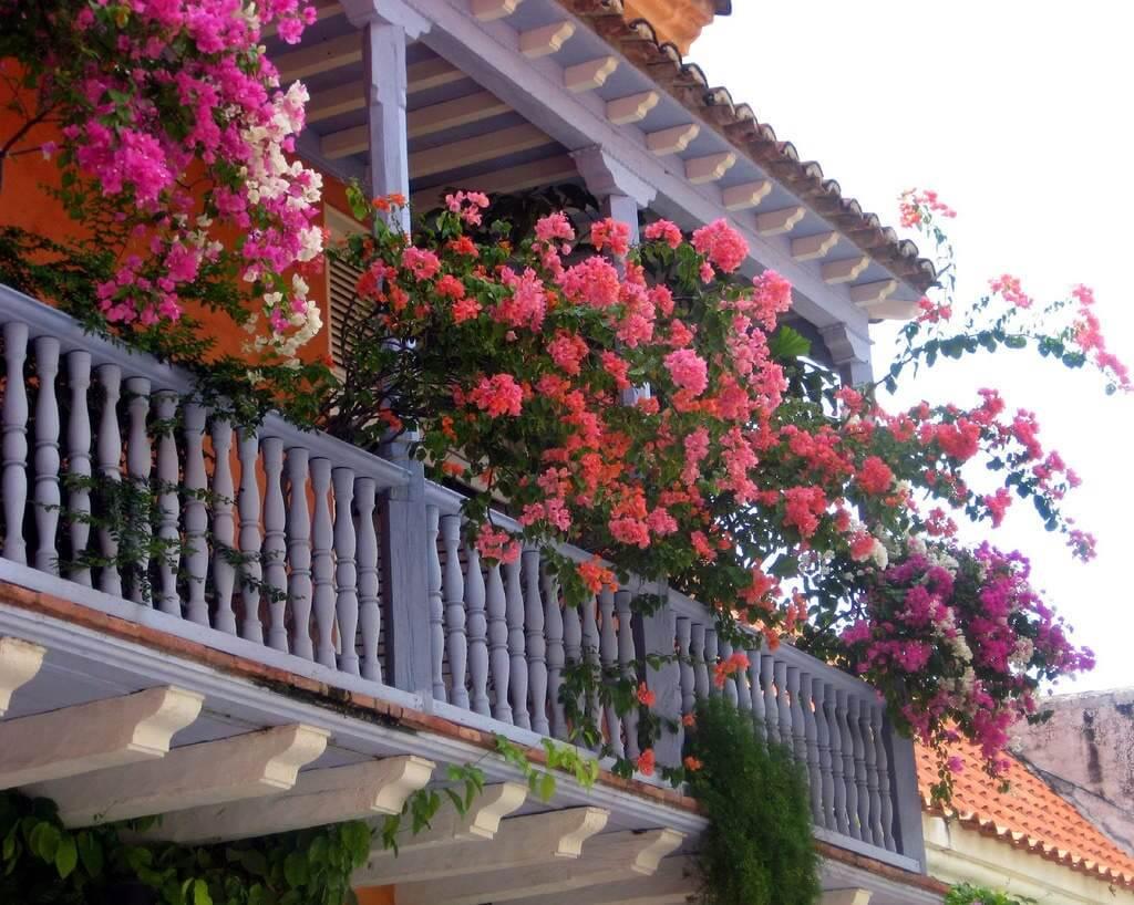 Trồng hoa để giảm nóng ban công nhà bạn.