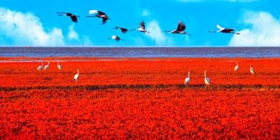 Pantai Merah Panjin