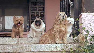 ¿Tu perro muerde a tu familia?