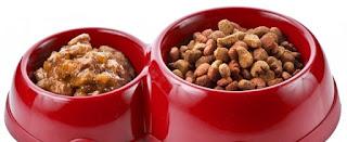 Hundediät - Nasses oder Trockenes Essen? Was sollten Sie Ihren Hund füttern?