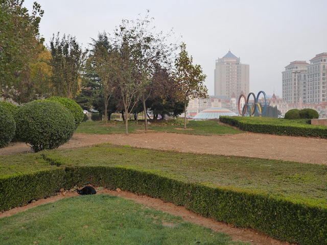 black cat hiding behind bushes at Olympic Square in Dalian