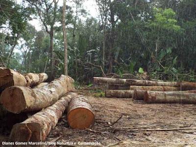 Instituto Imazon, Imazon, desmatamento, Amazônia, Amazon, desflorestamento, degradação florestal, monitoramento de desmatamento, ministério do Meio ambiente, MMA, fiscalização ambiental, amazon rainflorest