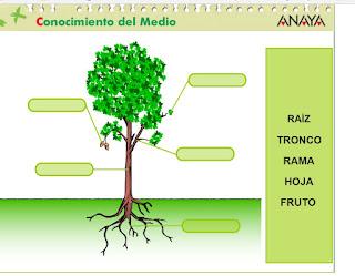 http://capitaneducacion.blogspot.com.es/2017/11/3-primaria-ciencias-de-la-naturaleza_73.html