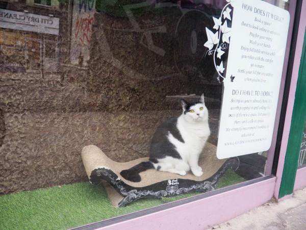 cat café rules