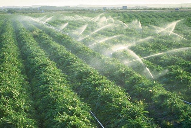 Le Maroc dans le top 50 mondial de la sécurité alimentaire.