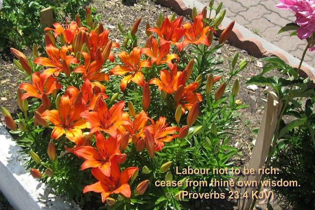 Bible Versed in Scenic Natural Flowers Wallpaper