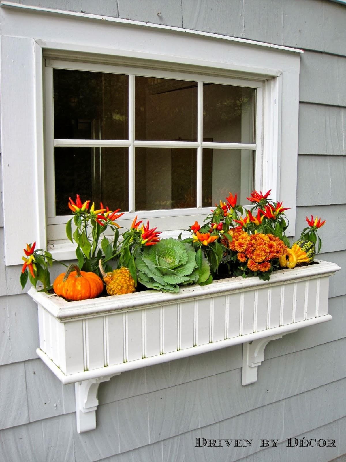 My Fall Window Boxes