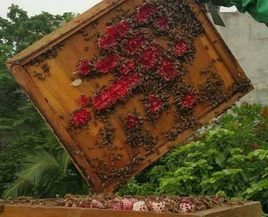 Κόκκινο μέλι σαν αίμα!!!