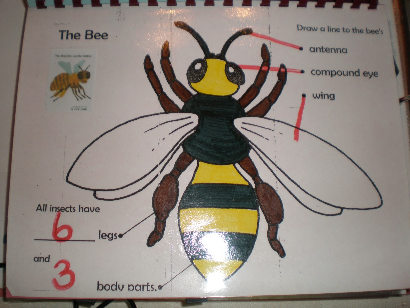 Ms Alexander S Teaching Adventures Introducing Insects