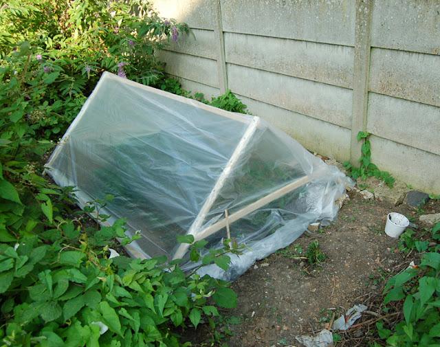 วิธีป้องกันผักสวนครัวจากแมลง