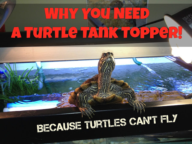 Why You Need A Turtle Topper Basking Platform & Dock... Turtles Can't Fly!