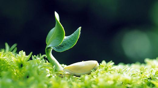 ¿Las plantas tienen conciencia e inteligencia?