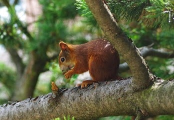 How to Get Rid of Squirrels in the Garden Effectively