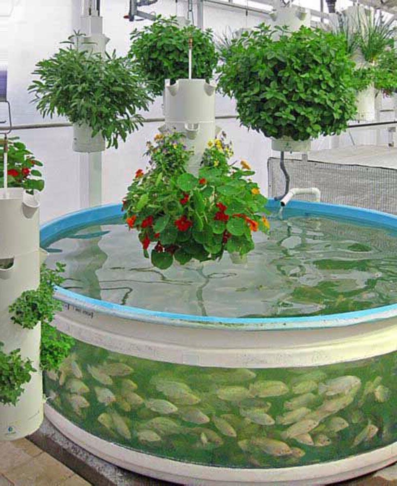 Apa itu Sistem Aquaponik? cara membuat aquaponik, manfaat sistem aquaponik sederhana, aquaponik adalah, cara membuat aquaponik, list sistem aquaponik terbaik dengan media tanam aquaponik, serta contoh aquaponik