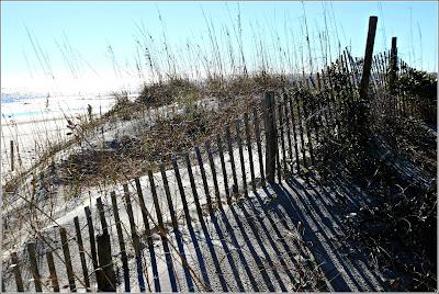 the shore line