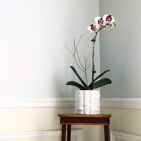 Orchid in the corner of the diningroom