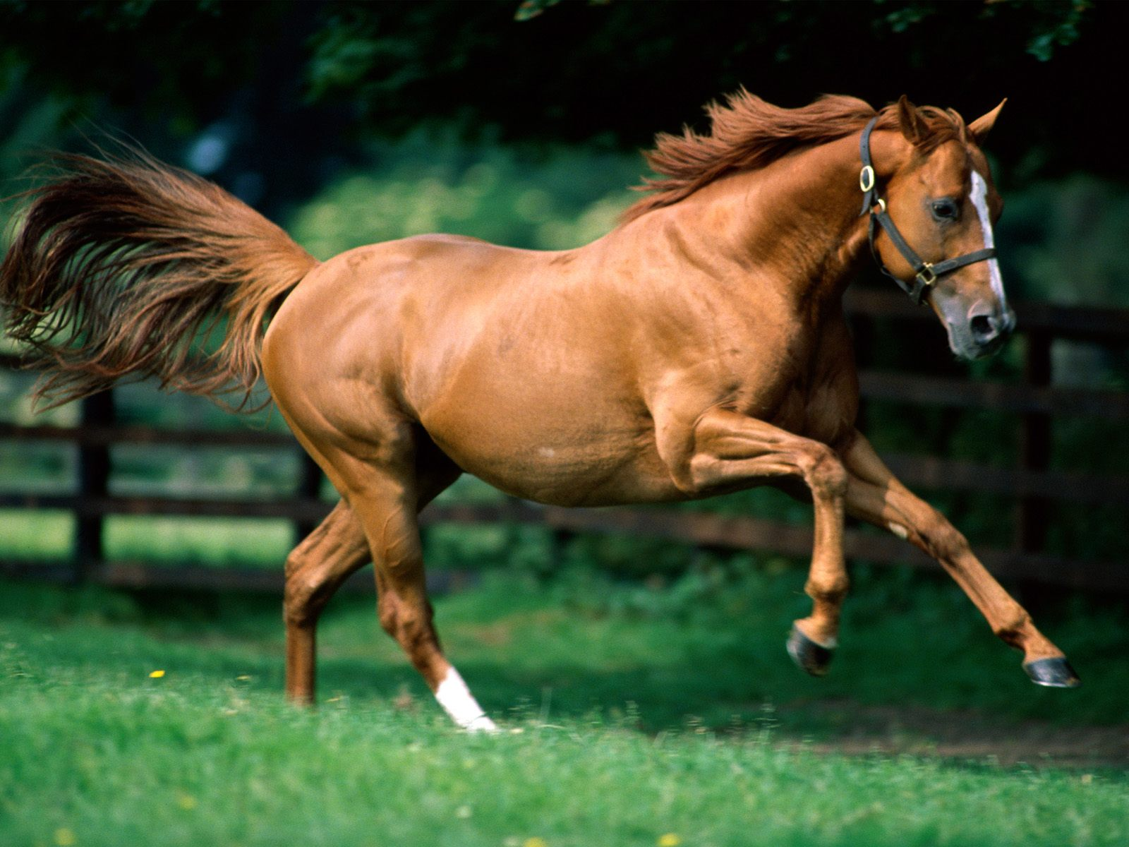 Daniel Sierra: Running Horses Wallpapers For Desktop