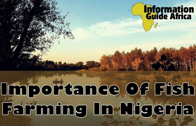 Importance Of Fish Farming In Nigeria