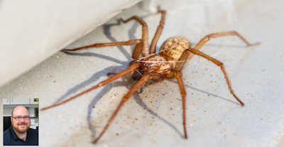 A Scientist Says You Must Not Kill Spiders In Your Home