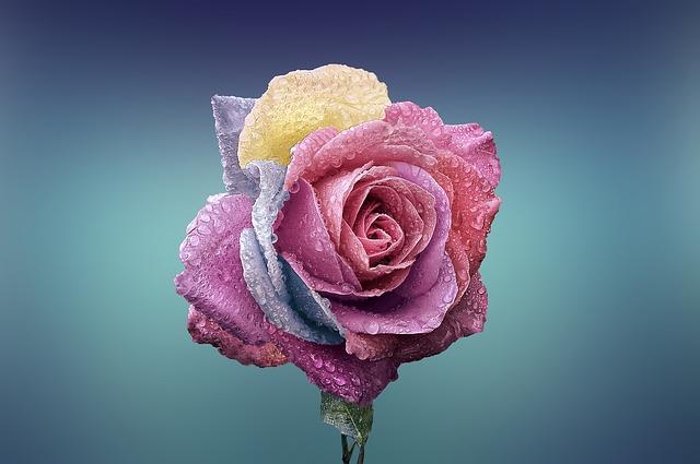 hoa tang nguoi yeu dep nhat