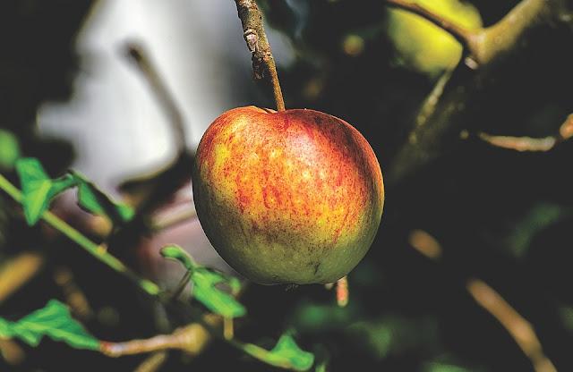 apel diet