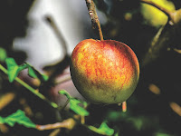 Cara Mudah Diet - Apel dan Telur, Tutorial diet
