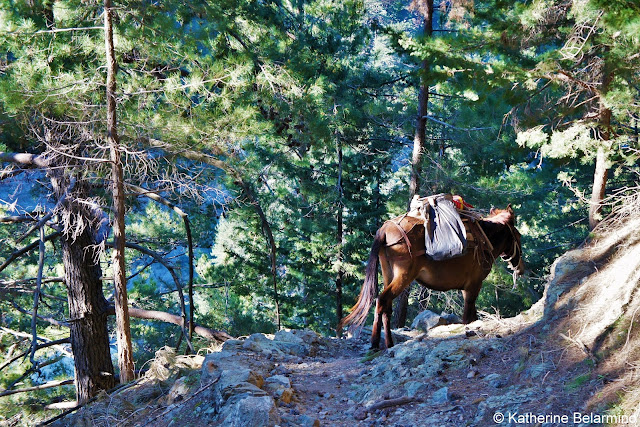 Trail Mule Samaria Gorge Hike Crete Greece