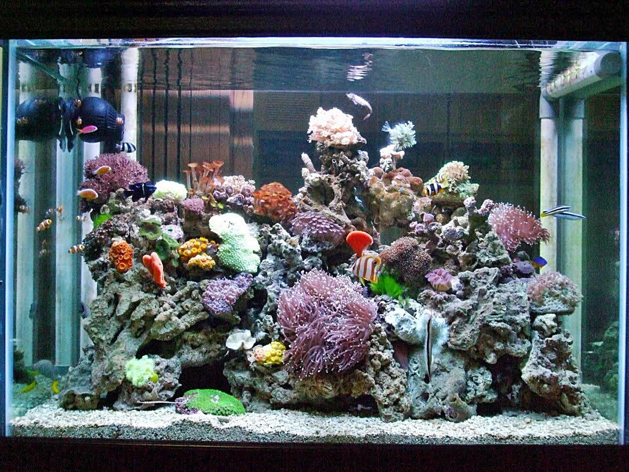 Tips Merawat Akuarium Air Laut Akuarium Ikan Hias Aquarium air laut sederhana