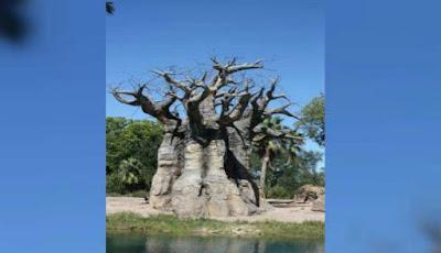 Pohon baobab di Afrika