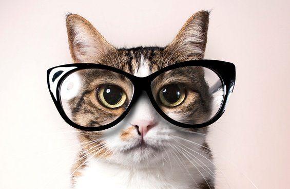 Los gatos pueden aprender