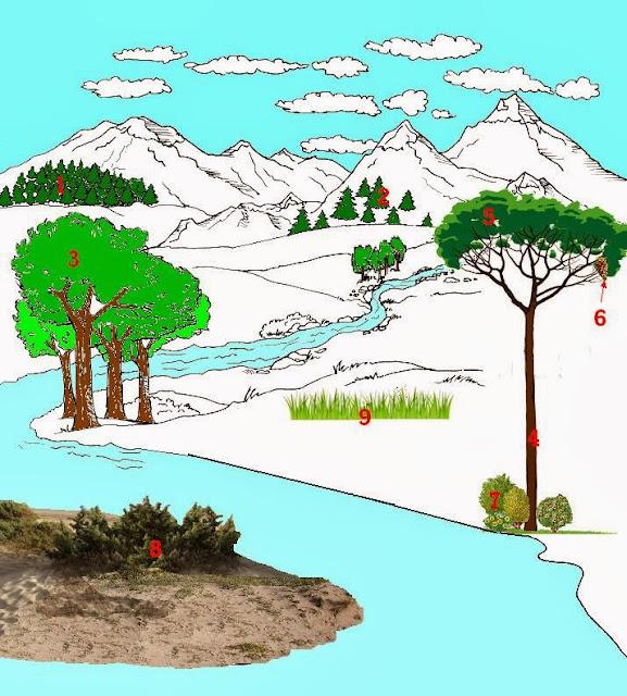 Imparare con la geografia 6 elementi del paesaggio la for Nomi di arbusti e cespugli